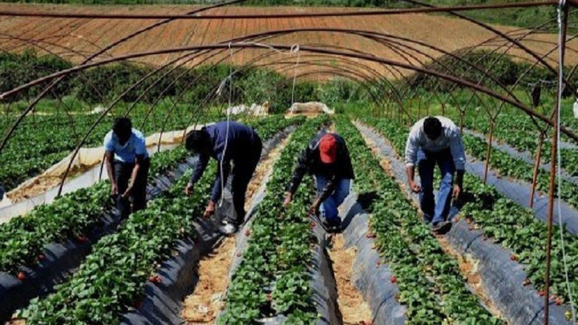 braccianti agricoli stranieri