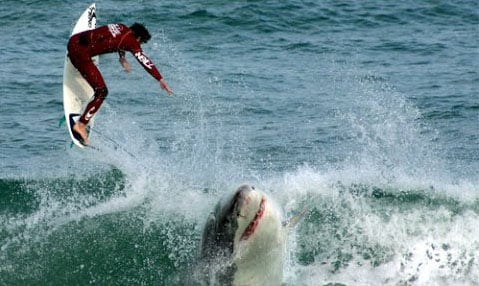 Squalo assassino, ucciso un surfista 26enne: non accadeva da 80 anni
