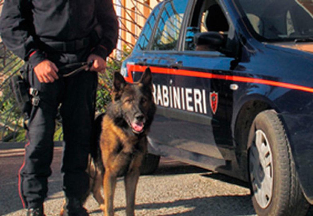 cani antidroga carabinieri 2