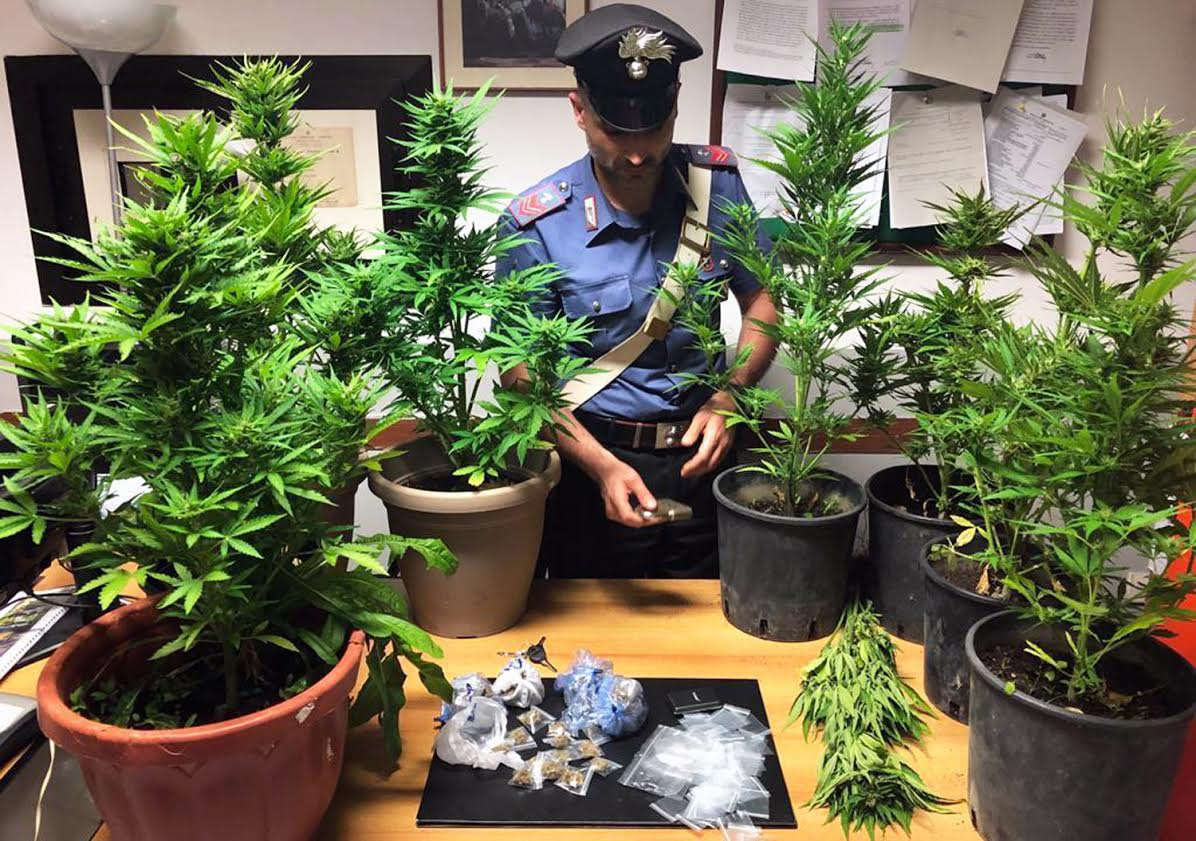 cannabis trecase
