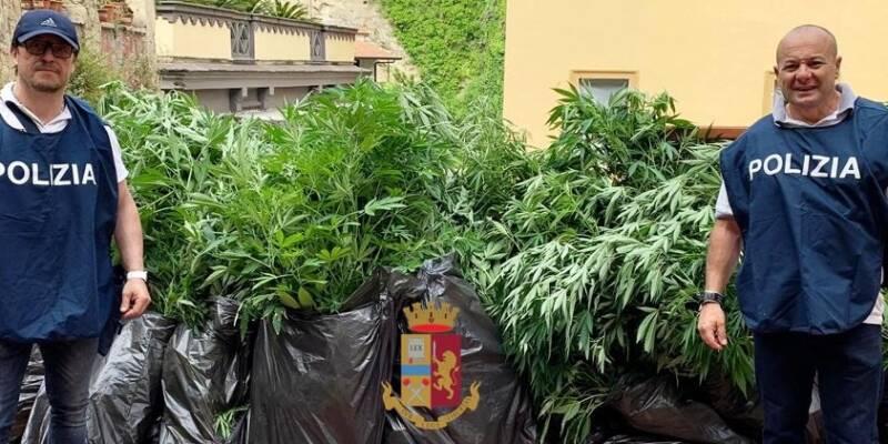 , Piantagione di marijuana su un terrazzo di via Tasso: denunciato un 49enne sequestrate 117 piantine