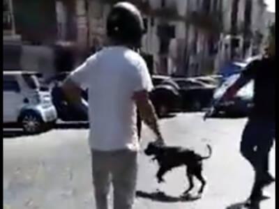 poliziotto uccide cane