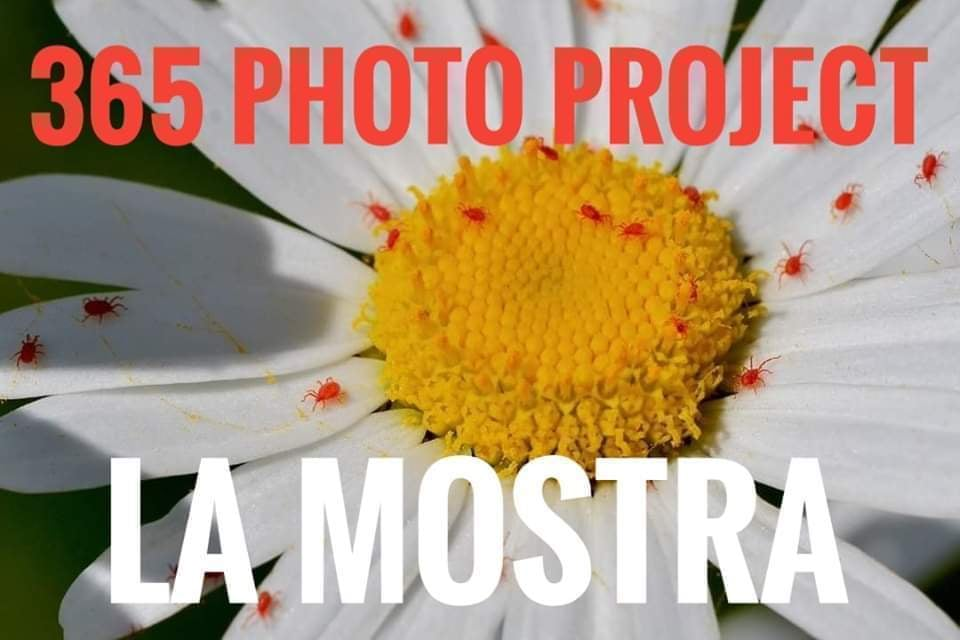 365 photo project