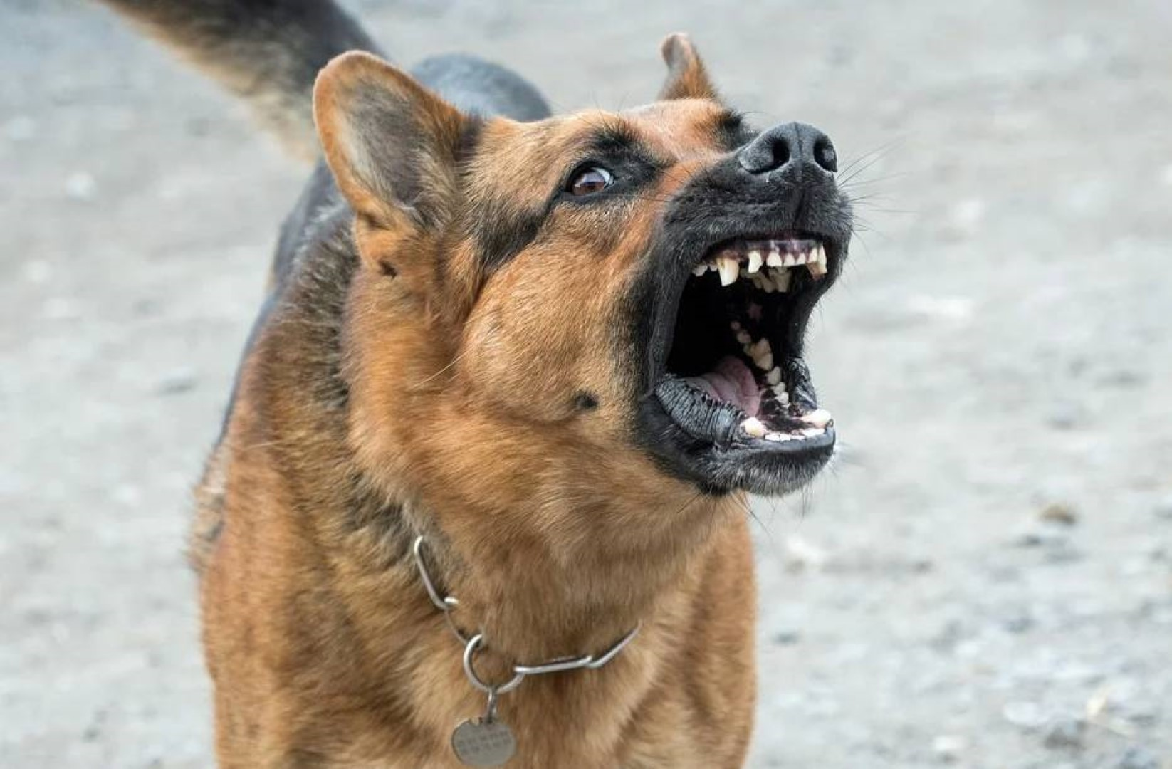 cane di famiglia morde e uccide