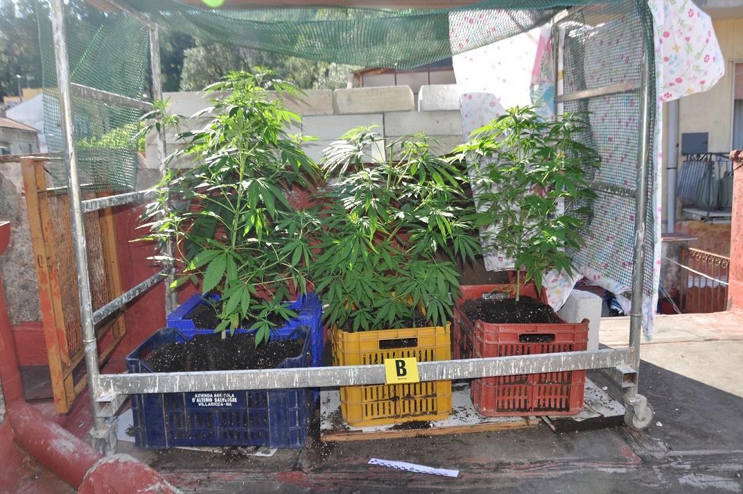 cannabis cava
