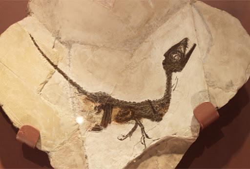 dinosauro ciro