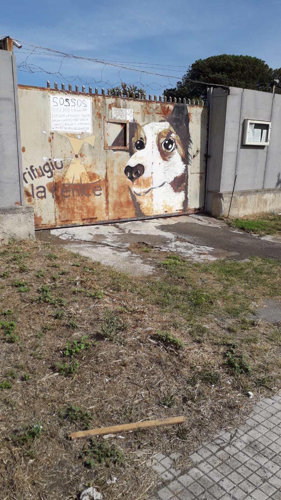 ponticelli rifugio cani