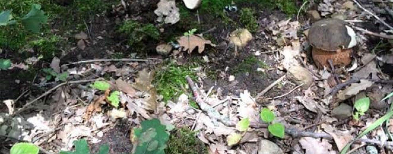 napoli avellino funghi