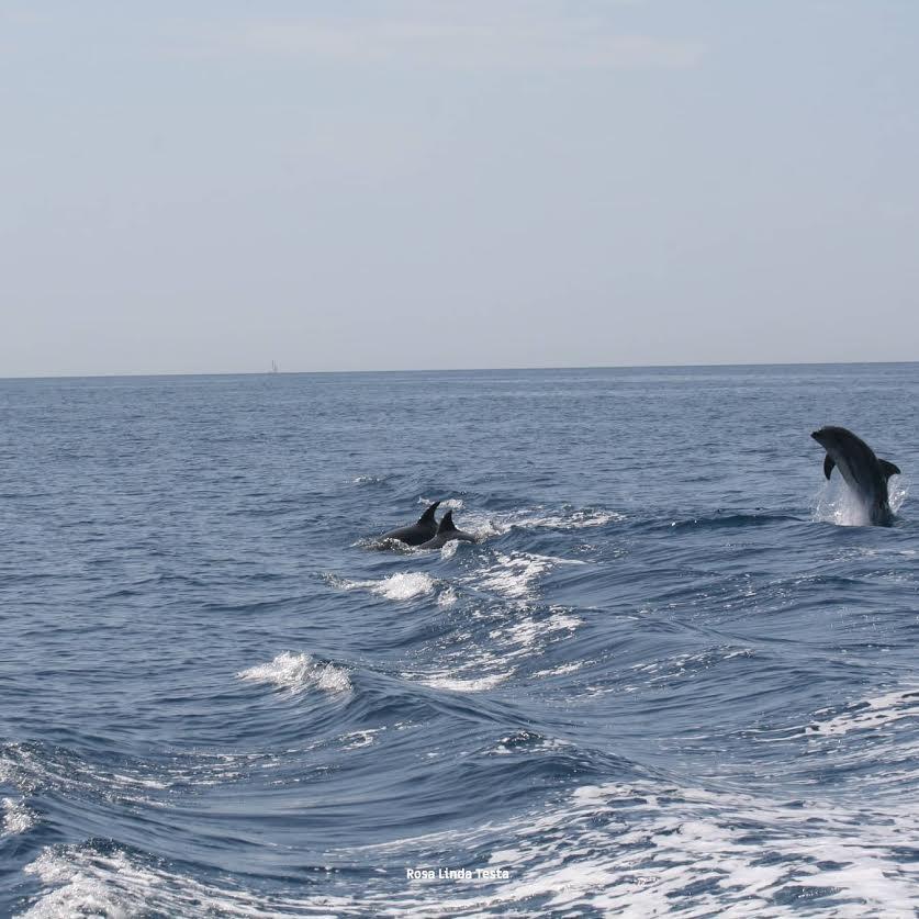 delfini parco marino punta campanella