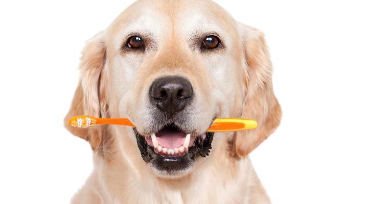 igiene quotidiana del cane
