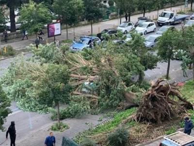 albero caduto fuorigrotta