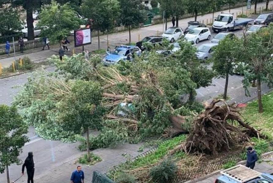 Napoli,fuorigrotta,crolla albero