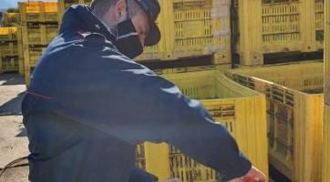 azienda pomodori, Rifiuti nell'azienda di pomodori di Contursi Terme: tutto sequestrato