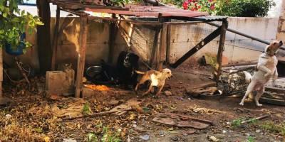 sequestro cani per maltrattamenti