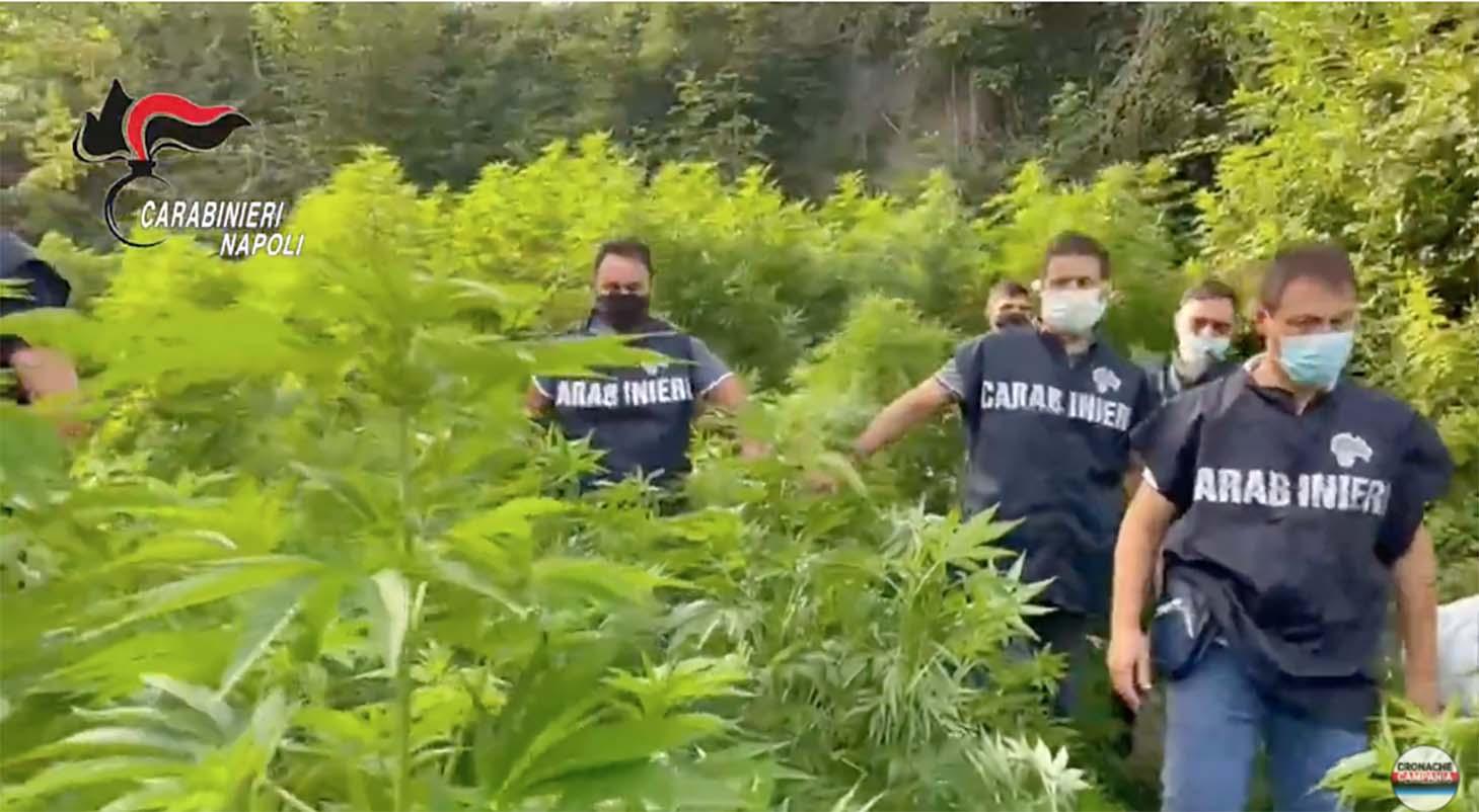 Piantagione marijuana nell'ex Polverificio Borbonico